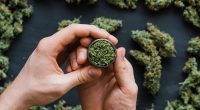 IM Cannabis inks two new sales agreements via Focus Medical Herbs