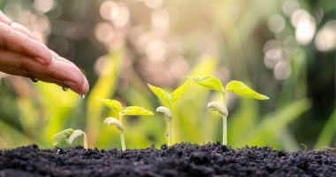 Primo Nutraceuticals considers agricultural acquisition