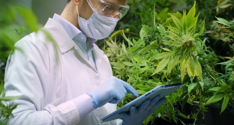 Vibe Bioscience acquires Californian cannabis facility