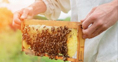 Bee Vectoring Technologies' fungicide gains European patent