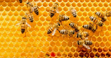 Bee Vectoring Technologies (CSE:BEE) hires Territory Manager