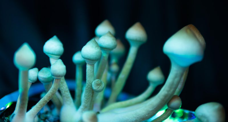 XPhyto: Innovating a Therapeutic Psychedelic Drug Pipeline