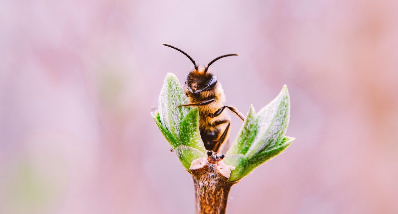 Bee Vectoring Technologies (CSE:BEE) notches U.S. patent for honeybee hive dispenser system