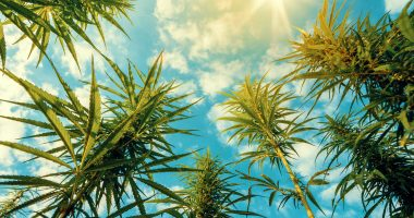 Isracann (CSE:IPOT) to import cannabis from major Israeli manufacturer