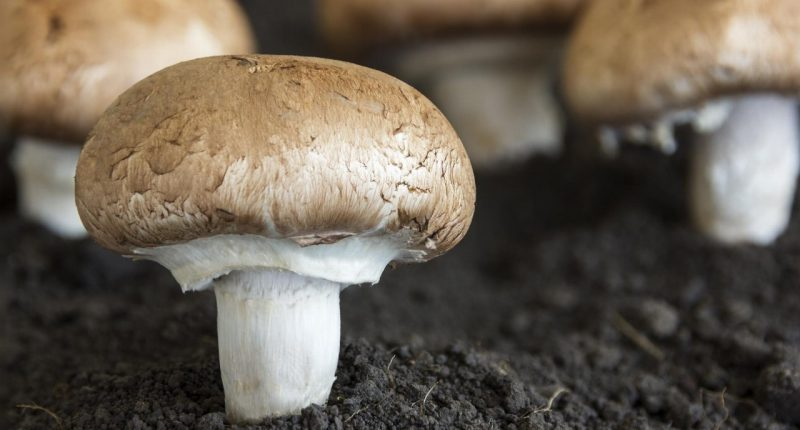 Red Light Holland (CSE:TRIP) signs letter of intent to acquire Happy Caps Mushroom Farm