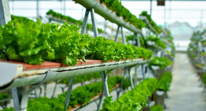 Affinor Growers (CSE:AFI) updates on its  Abbotsford Greenhouse Project