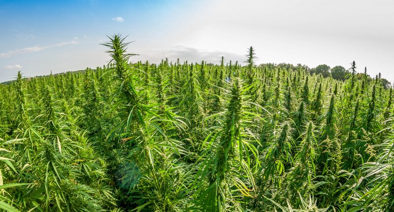 Captiva Verde (CSE:PWR) shares updates on cannabis operations for Q1 2021