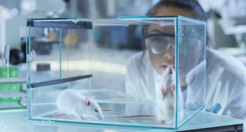 Mindset Pharma (CSE:MSET) confirms strong new drug program portfolio
