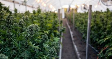 Water Ways (TSXV:WWT) receives a new order to upgrade a cannabis irrigation system