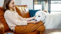 Tetra Bio-Pharma (TSX:TBP) re-activates veterinary clinical study in companion animals