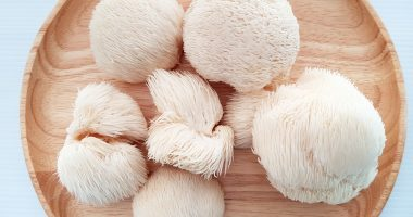 Pure Extracts (CSE:PULL) submits licence application for Lion's Mane functional mushroom product