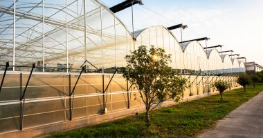 Feel Foods (CSE:FEEL) sells Langley greenhouse project for $1.5 million