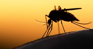 Relay (CSE:RELA) & Fio deploy Fionet Platform for malaria epidemic management in Rwanda