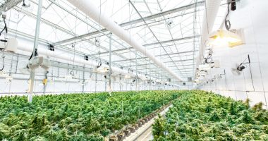 Cultivation begins at TransCanna's (CSE:TCAN) first crop management site